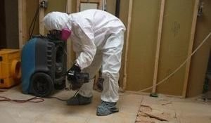 Technicians Cleaning Up Moldy Floorboards